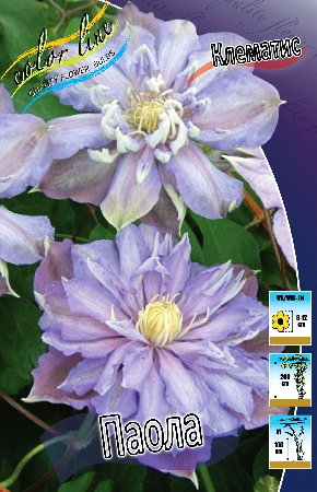 Clematis Paola