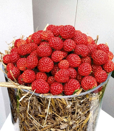 Fragaria x ananassa Framberry Red Dream 2